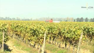 Japan tasting 2013 – Cono Sur  Winery